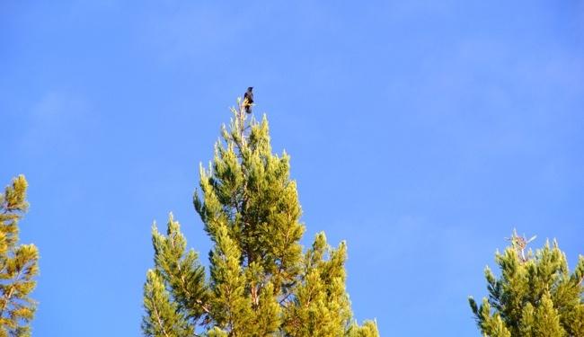 綠緣文藝﹣烏鴉寶貝
