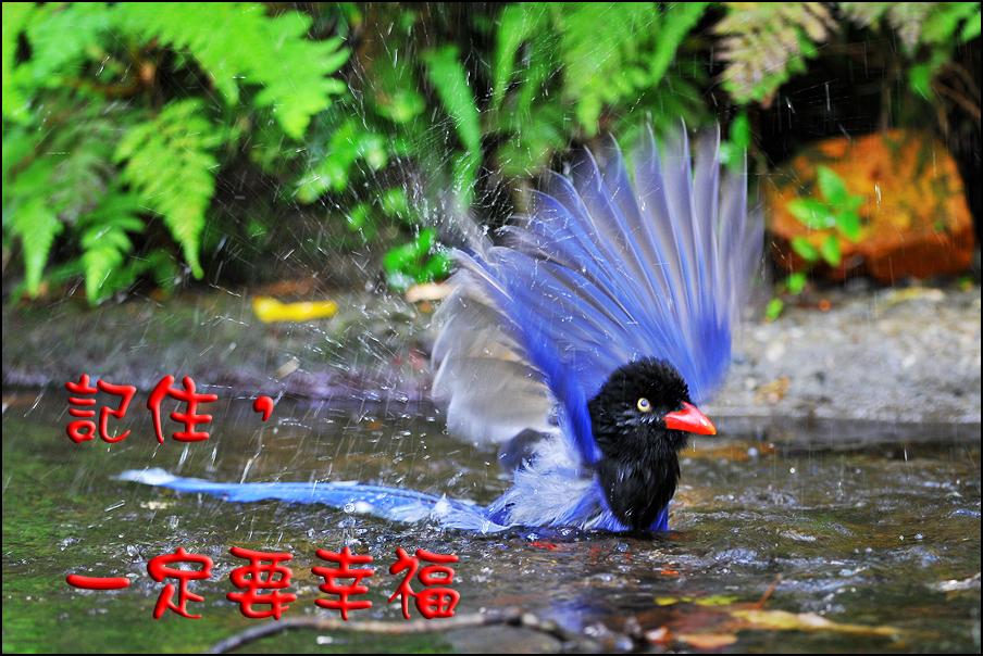 綠緣文藝 – 記住,一定要幸福 (作者:顧靜玉;編輯:林佳琪、葉貞君)