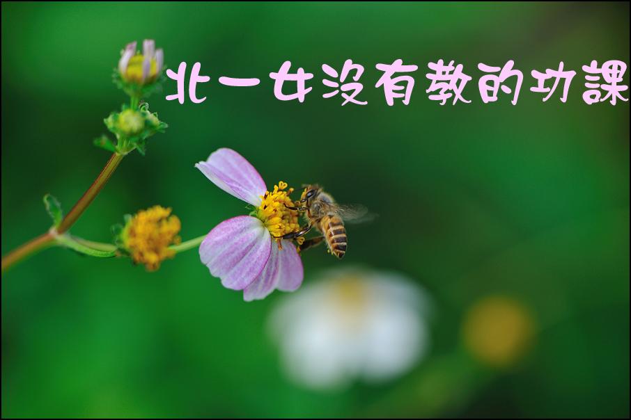 綠緣文藝 – 北一女沒有教的功課 (作者:吳玲瑤;編輯:林佳琪、葉貞君)